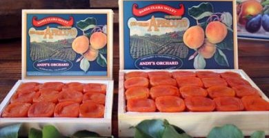 Blenheim Apricots – Premium – Wooden Gift Box (Limited Quantity) (Holiday Season Only)